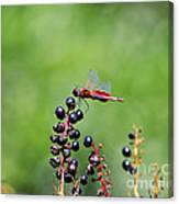 Carolina Saddlebags Canvas Print