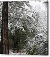Carolina Snowfall Canvas Print