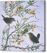 Carolina Wren And Jasmine Canvas Print