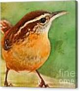 Carolina Wren Greeting Card Size Canvas Print