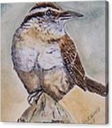 Carolina Wren Canvas Print