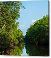 Caroni Swamp Canvas Print