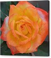 Caroty Splendor - Rose Canvas Print