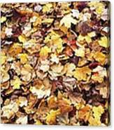 Carpet Of Leafs Canvas Print
