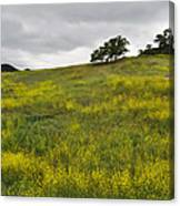 Carpet Of Malibu Creek Wildflowers Canvas Print