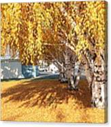 Carpet Of Yellow Leaves Canvas Print