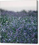 Carpinteria California Wildflowers Canvas Print