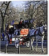 Carriage Driver - Central Park - Nyc Canvas Print