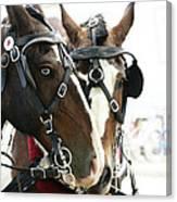 Carriage Horse - 3 Canvas Print