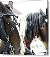 Carriage Horse - 5 Canvas Print