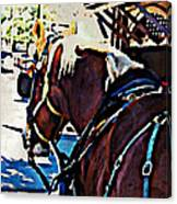 Carriage Horse Canvas Print
