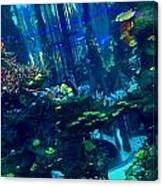 Casablanca Aquarium Close-up Canvas Print