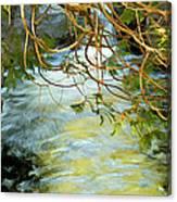Cascade Cedar Canvas Print