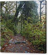 Cascade Forest Path Canvas Print