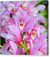 Cascade Of Pink Orchids Canvas Print