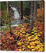 Cascade Creek  Autumn Canvas Print