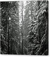 Cascade Snow Canvas Print