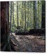 Cascades Forest Path Canvas Print