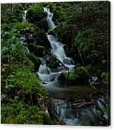 Cascading Brook In Mount Rainier National Park Canvas Print