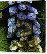 Cascading Flower Canvas Print