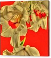 Cascading Gladiolas Canvas Print