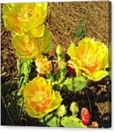 Cascading Prickly Pear Blossoms Canvas Print