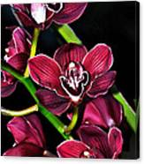 Cascading Red Orchids Canvas Print