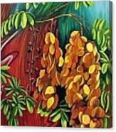 Cassia Canvas Print