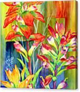 Castilleja Indivisa Canvas Print
