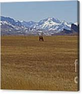 Castle Rock Horses   #8515 Canvas Print