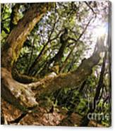 Castle Rock State Park Branch To The Sun Canvas Print
