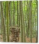 Castle Tree Stump Canvas Print