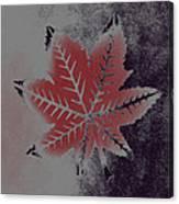 Castor Leaf Canvas Print