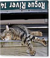 Cat And A Canoe Canvas Print