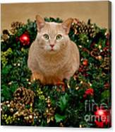 Cat And Christmas Wreath Canvas Print