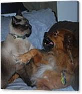 Cat And Dog Fight Canvas Print