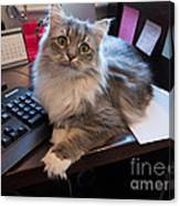 Cat And Keyboard Canvas Print
