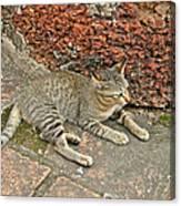 Cat At Wat Mahathat In 13th Century Sukhothai Historical Park-th Canvas Print