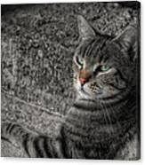 Cat Bicolored Canvas Print