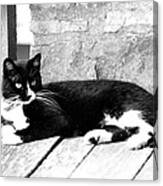 Cat Black And White Canvas Print
