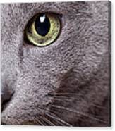 Cat Eye Canvas Print
