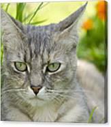 Cat Eyes Canvas Print