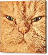 Cat Face Close Up Portrait. Painted Effect Canvas Print