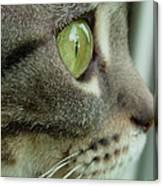 Cat Face Profile Canvas Print