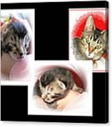 Cat Family Canvas Print