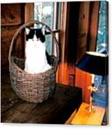 Cat In A Basket Canvas Print