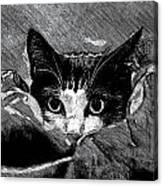 Cat In Hiding Canvas Print