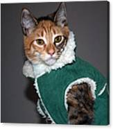 Cat In Patrick's Coat Canvas Print