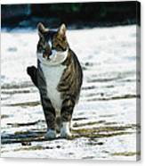 Cat In The Snow Canvas Print