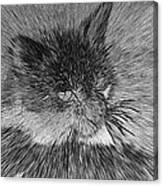 Cat - India Ink Effect Canvas Print